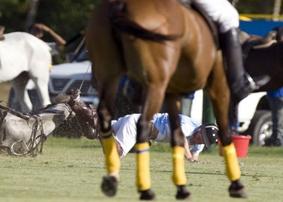 Idiot falling off horse.jpg