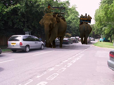 4X4-Elephants-on-School-run.jpg