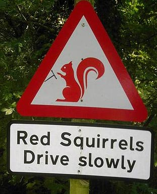 Beware of the Grey ones then - Lake district.jpg