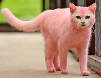 Pink Cat.jpg