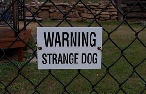 Strange Dog - Aren't they All?.jpg