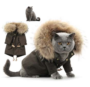 United Bamboo Cat fashion calendar 2011.jpg