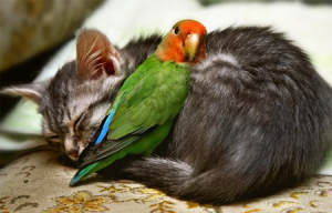 Love Birds Of A Feather  Where s Me Feathers